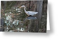 Great Blue Heron And Reflection IIi Greeting Card