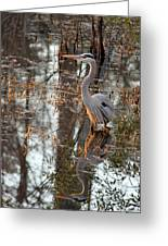Great Blue Heron And Reflection Greeting Card