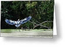 Great Blue Heron And Wood Ducks Greeting Card