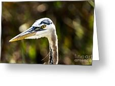 Great Blue Heron At Green Cay Greeting Card