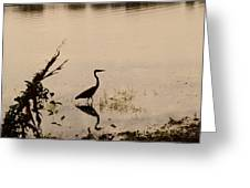 Great Blue Heron At Rollins Greeting Card
