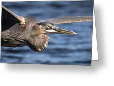 Great Blue Heron Close-up Greeting Card