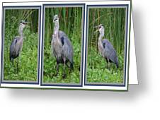 Great Blue Heron Collage Greeting Card