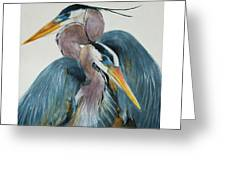 Great Blue Heron Couple Greeting Card by Jani Freimann
