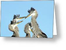 Great Blue Heron Discussion Greeting Card