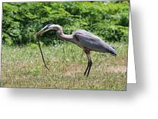 Great Blue Heron Eating Snake  Greeting Card