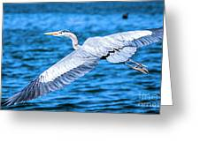 Great Blue Heron Flight Greeting Card