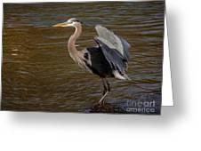 Great Blue Heron - Flooded Creek Greeting Card
