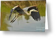 Great Blue Heron Flying Across Lake Greeting Card