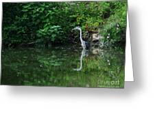 Great Blue Heron Hunting Fish Greeting Card