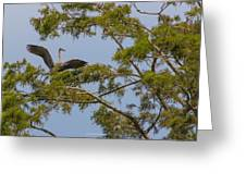 Great Blue Heron In Cypress  Greeting Card