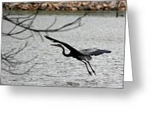 Great Blue Heron In Flight 6 Greeting Card