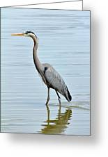 Great Blue Heron In River Greeting Card