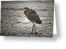 Great Blue Heron In The Snow Greeting Card