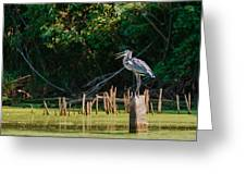 Great Blue Heron Mouth Greeting Card