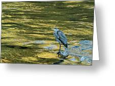Great Blue Heron On A Golden River Greeting Card