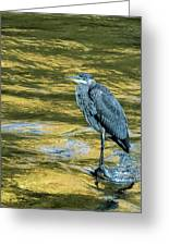 Great Blue Heron On A Golden River Vertical Greeting Card