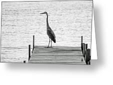 Great Blue Heron On Dock - Keuka Lake - Bw Greeting Card