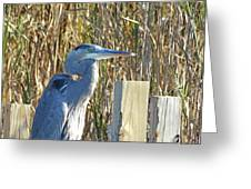 Great Blue Heron On Guard Greeting Card