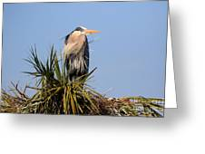 Great Blue Heron On Nest In A Palm Tree Greeting Card