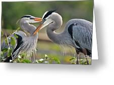 Great Blue Heron Pair 3 Greeting Card