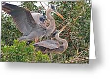 Great Blue Heron Pair  Greeting Card