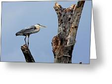 Great Blue Heron Perched Greeting Card