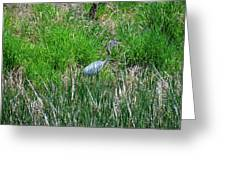 Great Blue Heron Series 1 Of 10 Greeting Card