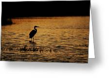 Great Blue Heron Silohuette Greeting Card