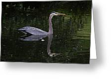 Great Blue Heron Swimming Greeting Card