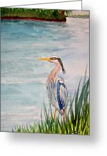 Great Blue Heron Two Greeting Card