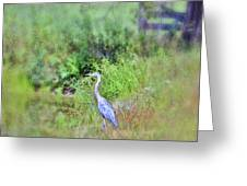 Great Blue Heron Visitor Greeting Card