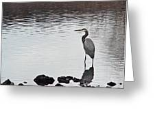 Great Blue Heron Wading 3 Greeting Card by Douglas Barnett