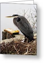 Great Blue Heron Wildlife Bird Greeting Card