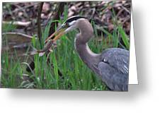 Great Blue Heron With His Catch Greeting Card