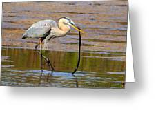 Great Blue Heron Wrestles A Snake Greeting Card