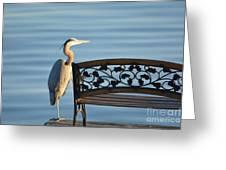 Great Blue Heron....resting My Leg Greeting Card