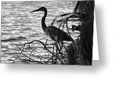 Great Blue In Black And White Greeting Card
