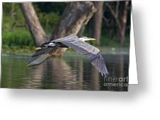 Great Blue In Flight Greeting Card