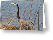 Great Blue Greeting Card