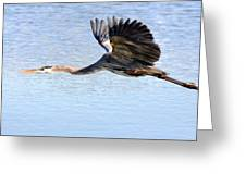 Great Blue Lift Off Series 4 Greeting Card