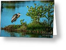 Great Blue On One Leg Greeting Card