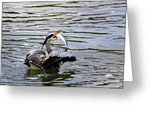 Great Blue With A Drum Greeting Card