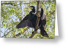 Great Cormorant - High In The Tree Greeting Card