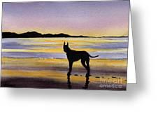 Great Dane At Sunset Greeting Card
