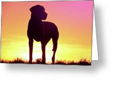Great Dane Silhouette Greeting Card