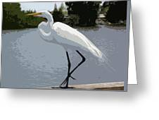 Great Egret    Ardea Alba Greeting Card