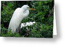 Great Egret 17 Greeting Card