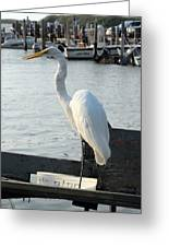 Great Egret 25 Greeting Card