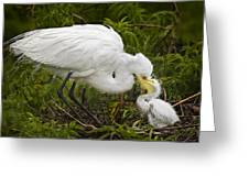 Great Egret And Chick Greeting Card